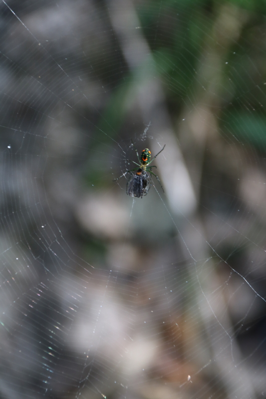 Spider (Bugs and Insects), Goliad State Park